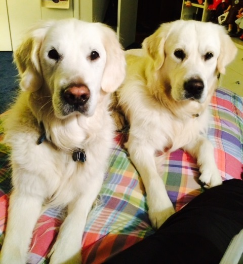 two beggars